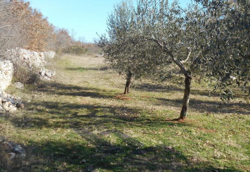 Kuća, zemljište 24.910 m2, 340 maslina, Vodnjan.